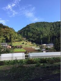 bamboo grassy曙橋店、おススメのお野菜たち!!