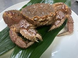 本日のおすすめメニュー「毛蟹の殻造り」@恵比寿の大人の隠れ家 鉄板焼き バンブーグラッシィ(テイクアウト・デリバリーもやってます!)